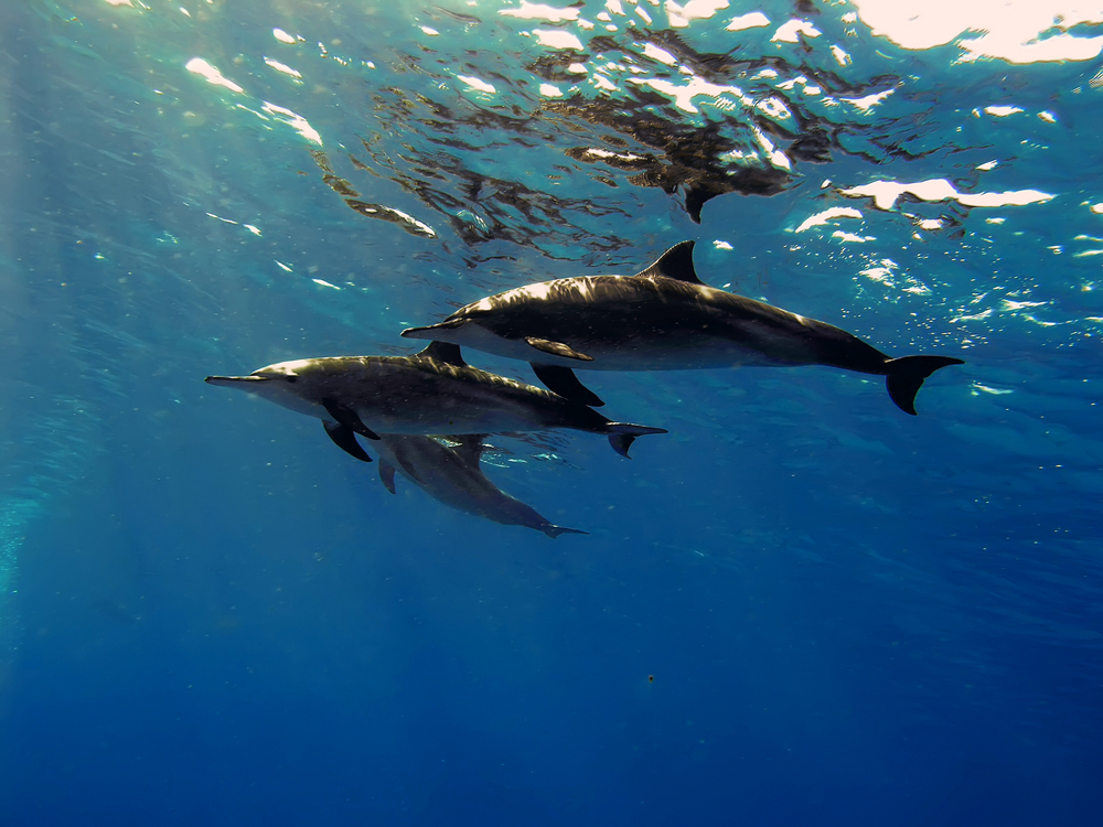 Dolphins – the Facts - Dolphin Way - photo#7