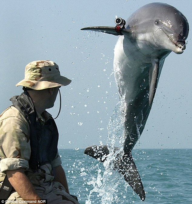 War Dolphins - Dolphin Way - photo#25