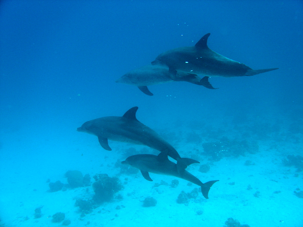Dolphins value good friends and relatives - Dolphin Way - photo#26