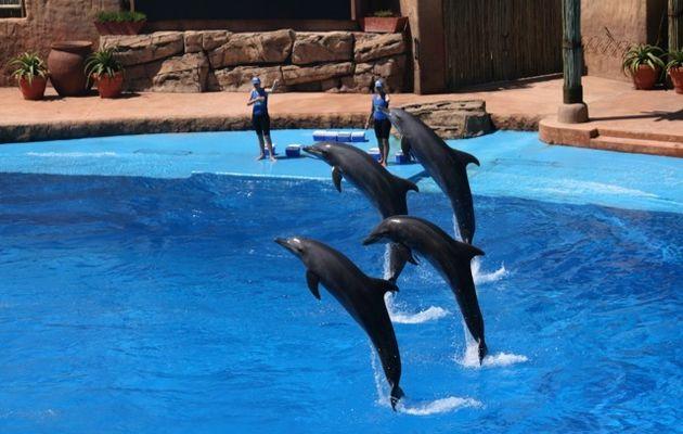 Dolphin show at Maldives