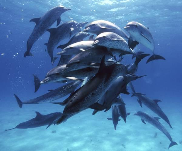 Animal behaviour: Social networks of the dolphin kind