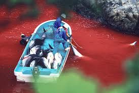 World's top zoo organisation accused of links to Taiji dolphin slaughter in Japan