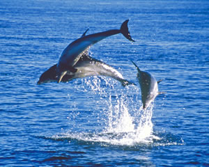 WDC welcomes new international commitment to end live capture of whales and dolphins