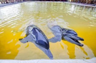 circus dolphins