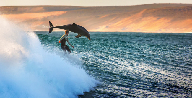 Whales jumping out of water next to surfer - photo#5