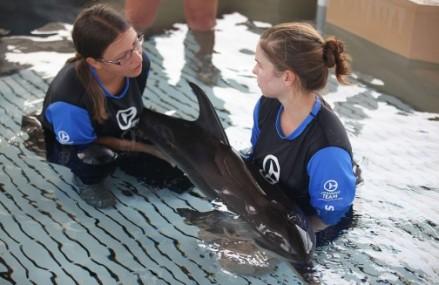 Malnourished baby dolphin being nursed at Clearwater Marine Aquarium
