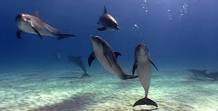10 Facts for National Dolphin Day
