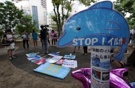Dolphin hunting season kicks off in Japan
