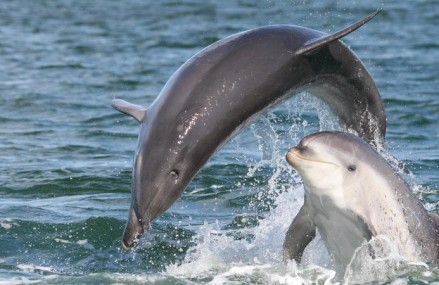 Small and isolated dolphin populations are under threat