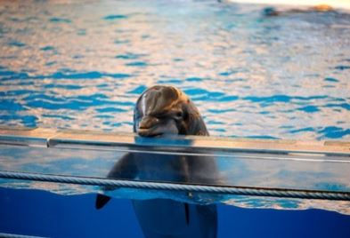 SeaWorld Stock Closes At Lowest Point Ever After Virgin America Cuts Ties