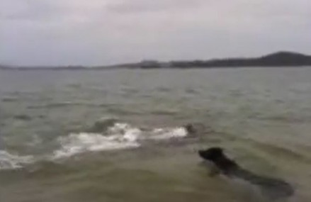 Puppy Befriends Pod Of Playful Dolphins