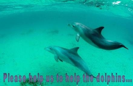 Australian dolphin surveyors praise Dolphin Way