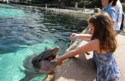 SeaWorld ends public dolphin feeding