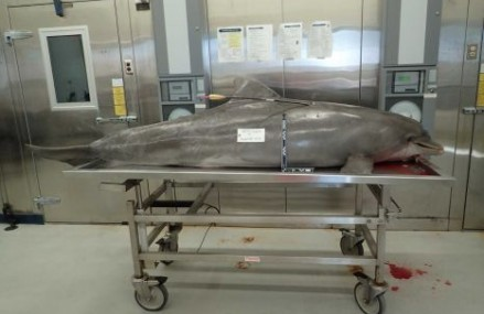 Teens convicted in second US dolphin bow-killing