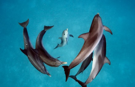 National Geographic features communication between humans and dolphins