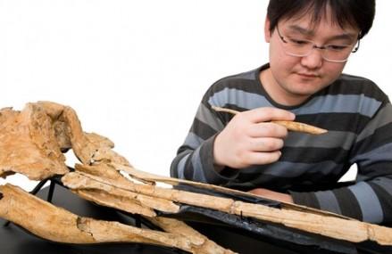 Ancient marine dolphin fossil found in Waitaki, NZ