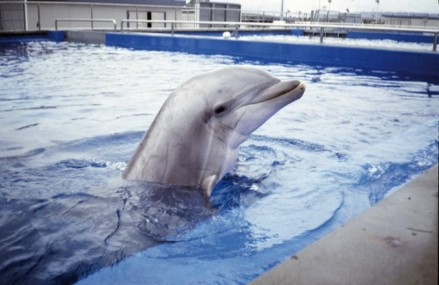 WDC Joins Alliance to Halt Growth of Chinese Captive Dolphin Facilities