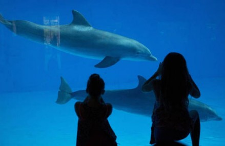 Think twice before seeing dolphin shows says leading marine life expert