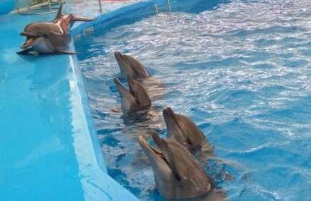 Dolphin Bay Phuket dolphinarium opens despite criticisms from animal activists