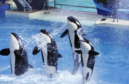 SeaWorld withdraws plans for orca tank project