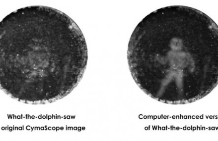New images reveal for the first time how dolphins 'see' humans