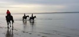 Horses meet dolphins video