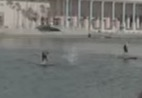 Video shows dolphin jumping over paddle boarder in Tampa Bay, USA