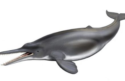 How a grey chunk of rock will rewrite our prehistoric past – an ancient dolphin