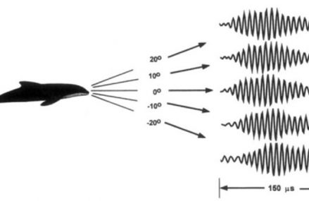 Humans Are Being Taught to Echolocate Like Dolphins – and It's Surprisingly Easy