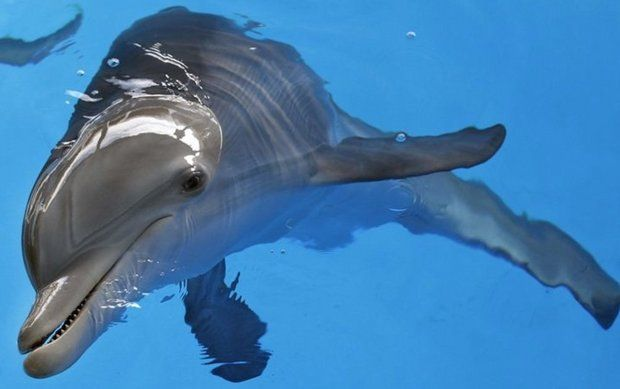 Documentary details man's love affair with dolphin ... - photo#9