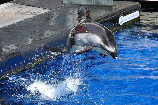 Bill to End Dolphin and Whale Captivity Reintroduced In ... - photo#41